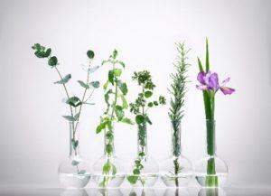 ピトレティカ植物一覧